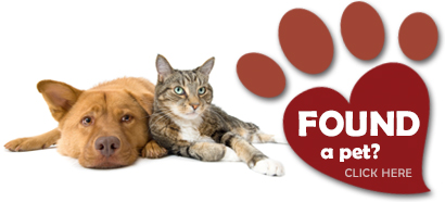 Register found pets (such as dogs, cats, parrots, rabbits etc)