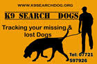 K9 Search Dogs