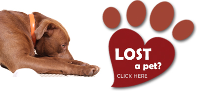register lost and found cats, dogs, parrots and other pets with Pets Located