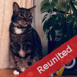 Loki - Reunited by PetsLocated.com