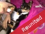 Pets reunited by Pets Located