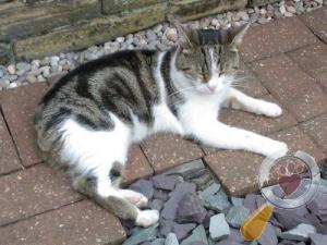Cat lost in Frizinghall, Bradford, West Yorkshire