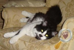 Cat lost in Southbourne/Bournemouth