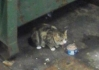Cat Found in Stansted Airport (CM24)