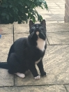 Cat Lost in Clifton (NG11)
