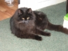 Cat Found in Polgooth, Cornwall (PL26)