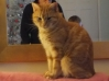 Cat Lost in Whitstable (CT5)