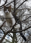 Cat Lost in Tipton Farly Park (DY4)