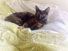 Cat Lost in Bournemouth (BH1)