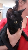 Cat Found in Cannock (WS11)