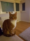 Cat Lost in Leigh-On-Sea (SS9)