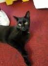Cat Found in Southville, Bristol (BS1)