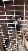 Ferret Found in Leicester (LE5)