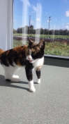 Cat Found in Dines Green, Worcester (WR2)