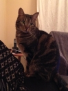 Cat Lost in Cardiff (CF14)