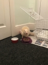 Ferret Found in Langley Park (DH7)