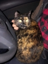 Cat Found in Bootle (L20)