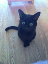 Cat Lost in Romford (RM7)
