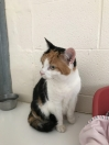 Cat Found in Walsall (WS2)