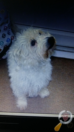 Lost Dog :: Bromley (BR1)