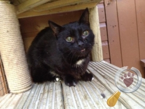 Found Cat :: Rickmansworth (WD3)