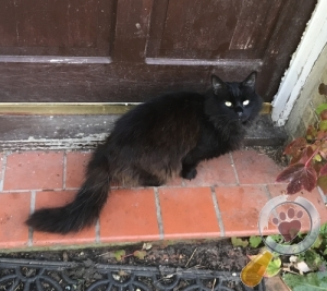 Found Cat :: March (PE15)