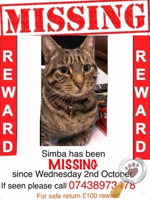 Lost Cat :: West Bromwich (B70)