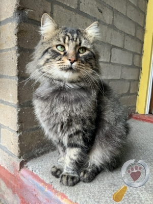 Found Cat :: Hoxton, London. (N1)