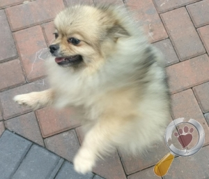 Lost Dog :: Chester Le Street Dhdr (DH2)