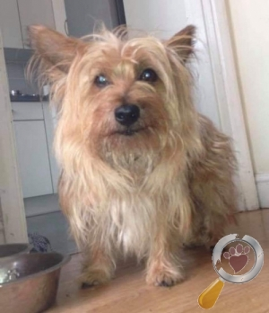Dog lost in Turnberry, Great Holland'S, Bracknell