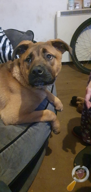 Lost Dog :: Caister On Sea Great Yarmouth (NR30)