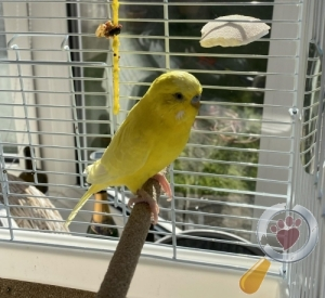 Bird lost in Woodmansey, East Riding of Yorkshire