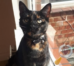 Cat lost in Kettering, Northants