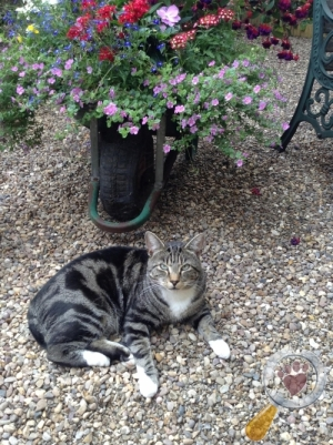 Cat lost in Thanet