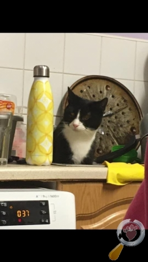 Cat lost in High And Low Bishopside, Harrogate