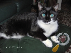 Cat lost in Middlewich, Cheshire East