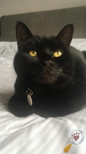 Cat lost in Tower Hamlets