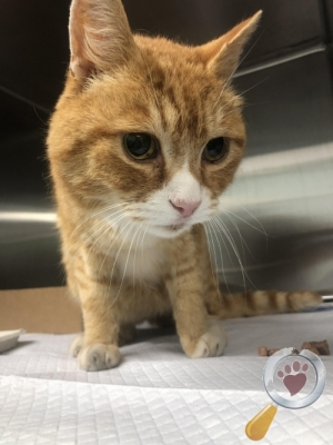 Found Cat :: Salford, Greater Manchester (M5)