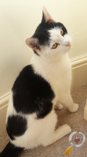 Cat lost in Catshill and North Marlbrook, Bromsgrove