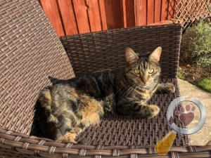 Cat lost in Birstall, Charnwood
