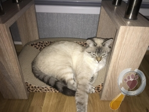 Lost Cat :: Wirral (CH49)