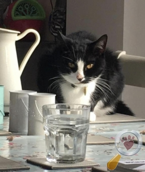 Cat lost in Radyr And Morganstown, Cardiff