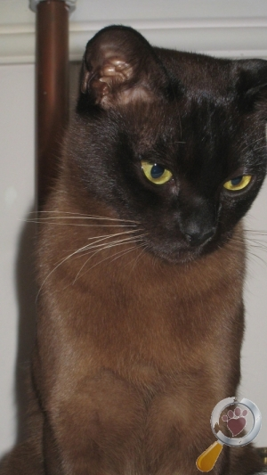 Cat lost in Great Warford, Cheshire East