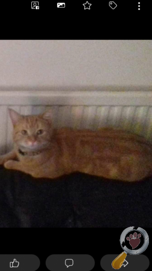 Cat lost in Leicester
