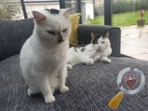 Cat lost in Westerleigh, South Gloucestershire