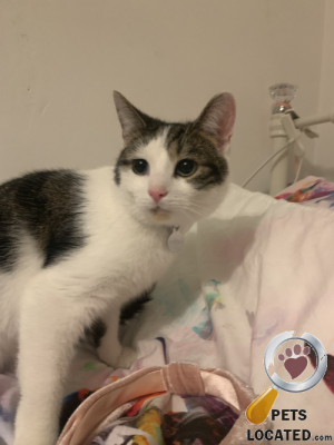 Cat lost in Bangor/ Ards And North Down