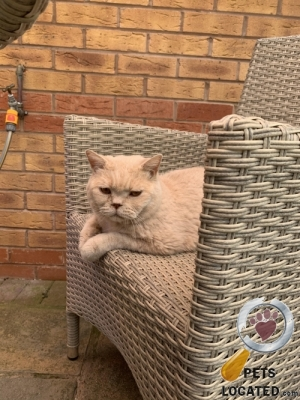 Cat lost in Wrockwardine, Telford and Wrekin