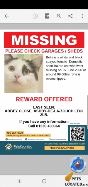 Cat lost in Ashby-de-la-Zouch, North West Leicestershire