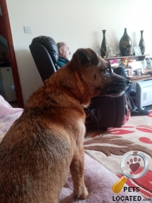 Dog lost in Penwithick/ Stenalees Cornwall