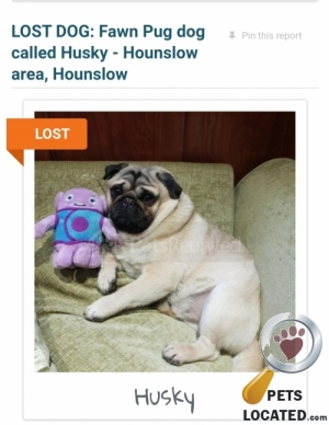 Dog lost in Hounslow